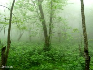 مناظر قبل از گردنه جنگل پیمایی چاله سرا به پلت کله سر