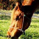 Horses in Mi-Sere Dasht Walking