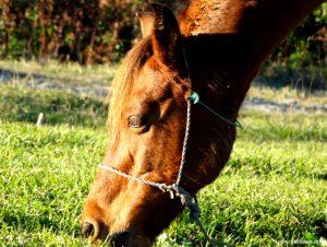 Horses in Mish-Sere Dasht Walk