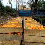 Loading Oranges