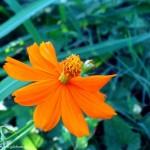 گل در حیاط گیله بوم