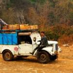 روستای قاسم آباد - فروش مرکبات