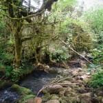 Khoshke-Lat River Headwater under mass trees , Merse - Konale Hiking