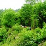 Path through Jungle to Waterfall , Path through Jungle