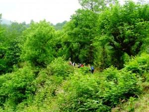 مسیر جنگلی تا آبشار