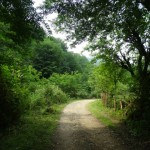 Path through Jungle , Merse - Konale Hiking
