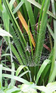 عنکبوتها و دامها